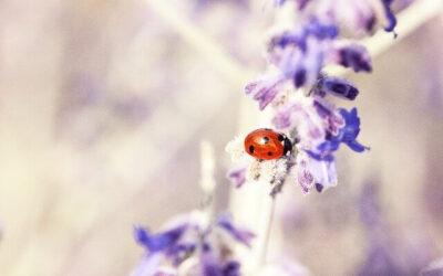 Parasportnap Méhecskékkel